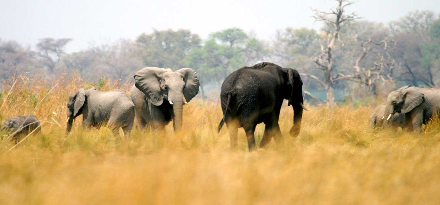 Image result for biosphere big cat elephant expeditions namibia