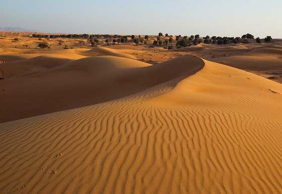 Citizen Science Volunteer in Dubai   Oryx, Wildcat and