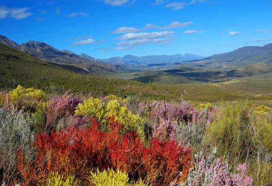 The fynbos Cape floral kingdom & mountains, a UNESCO World Heritage Site