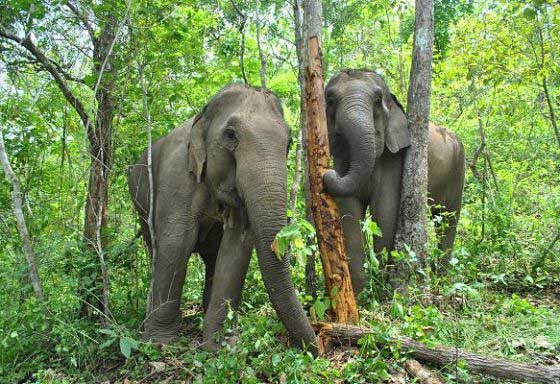 Natural elephant behaviour of our study population