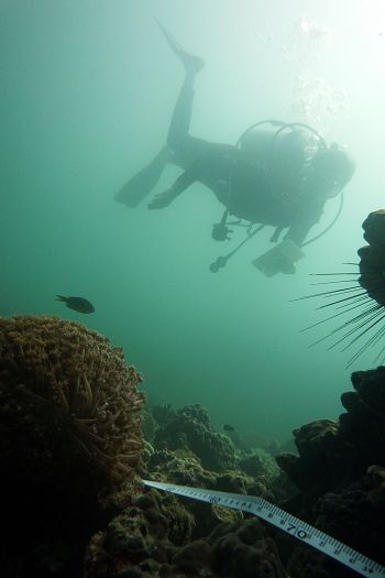 Surveying the reef along a transect tape.