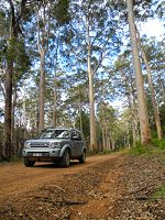 Expedition Land Rover in the forest study site